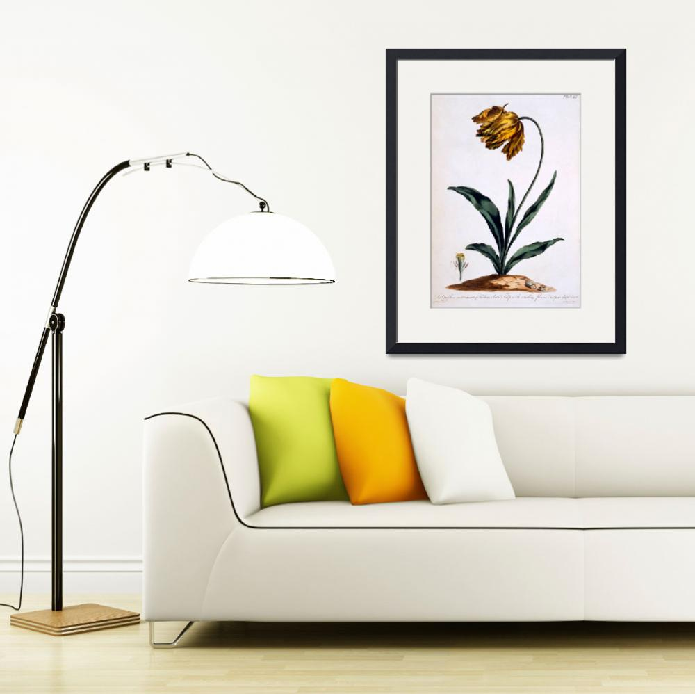 """""""Tulip with Anoding Flower and Spear Shaped Leaves""""  by fineartmasters"""