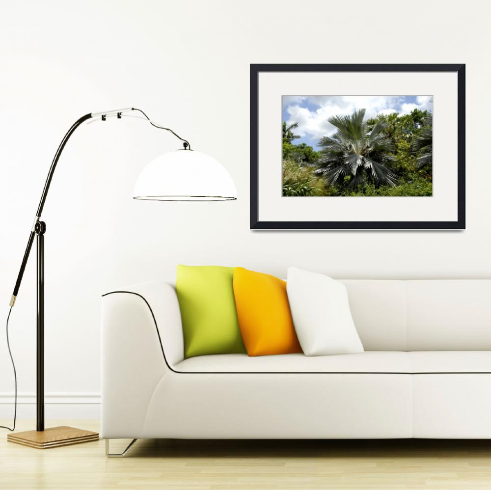 """""""Cayman Islands Plant Life : Silver Thatch&quot  by RonScott"""