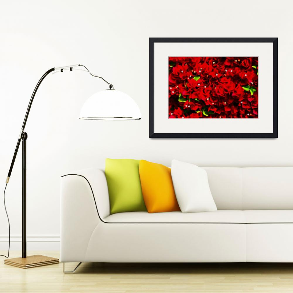 """""""Bougainvillea Wall DigiArt""""  (2008) by rmccord"""