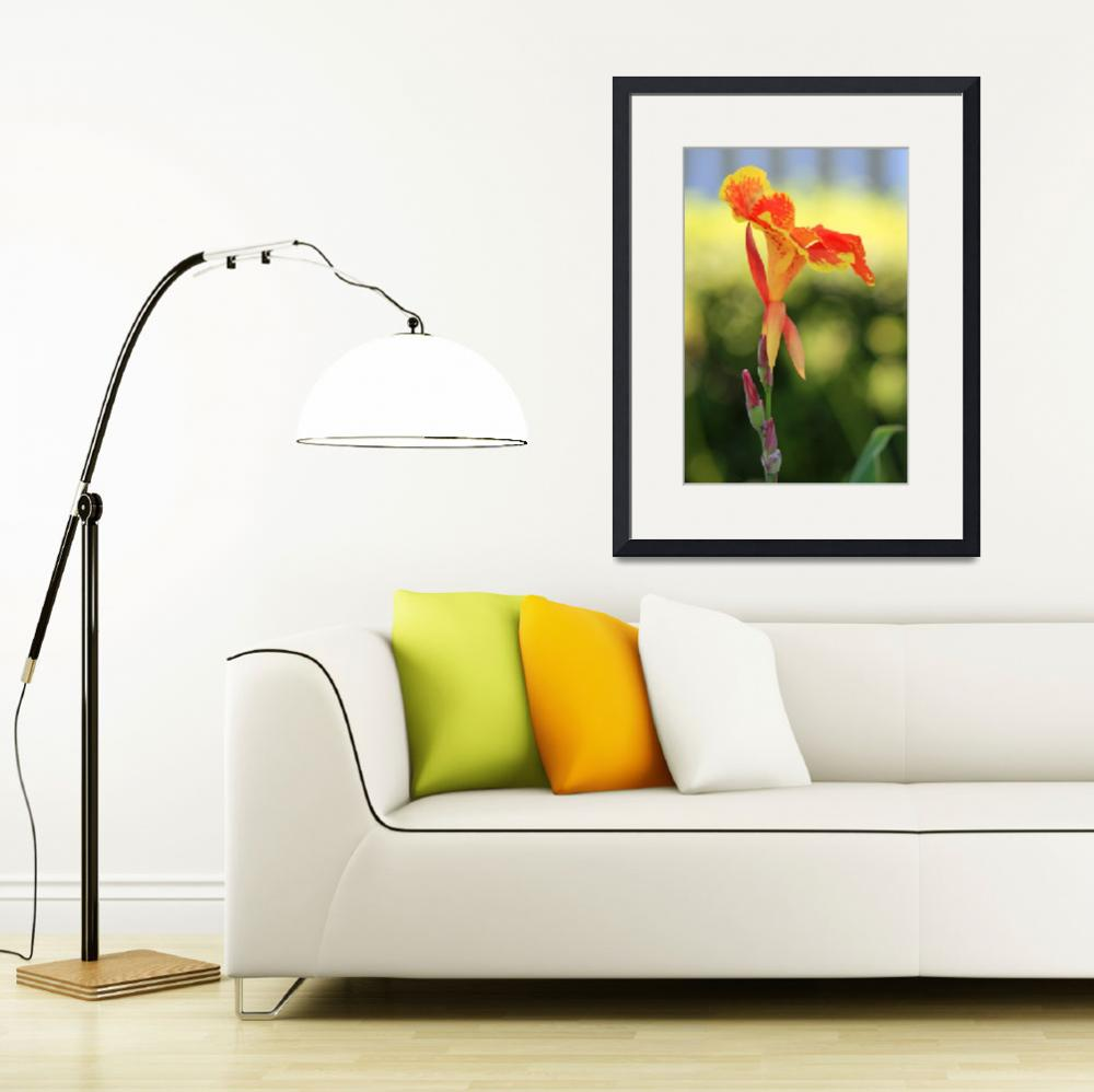 """""""Canna Lily Flower   Orange and Yellow&quot  (2012) by KsWorldArt"""