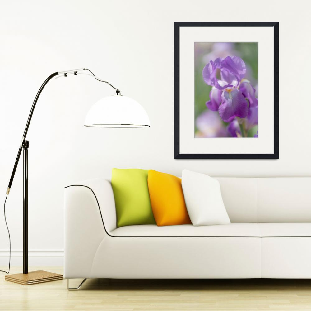 """""""Aphrodite 1. The Beauty of Irises""""  (2017) by JennyRainbow"""