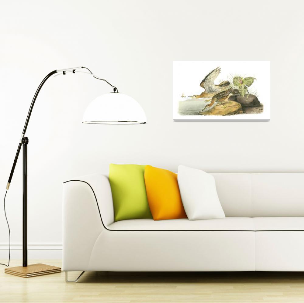 """Upland Sandpiper Bird Audubon Print""  by ArtLoversOnline"