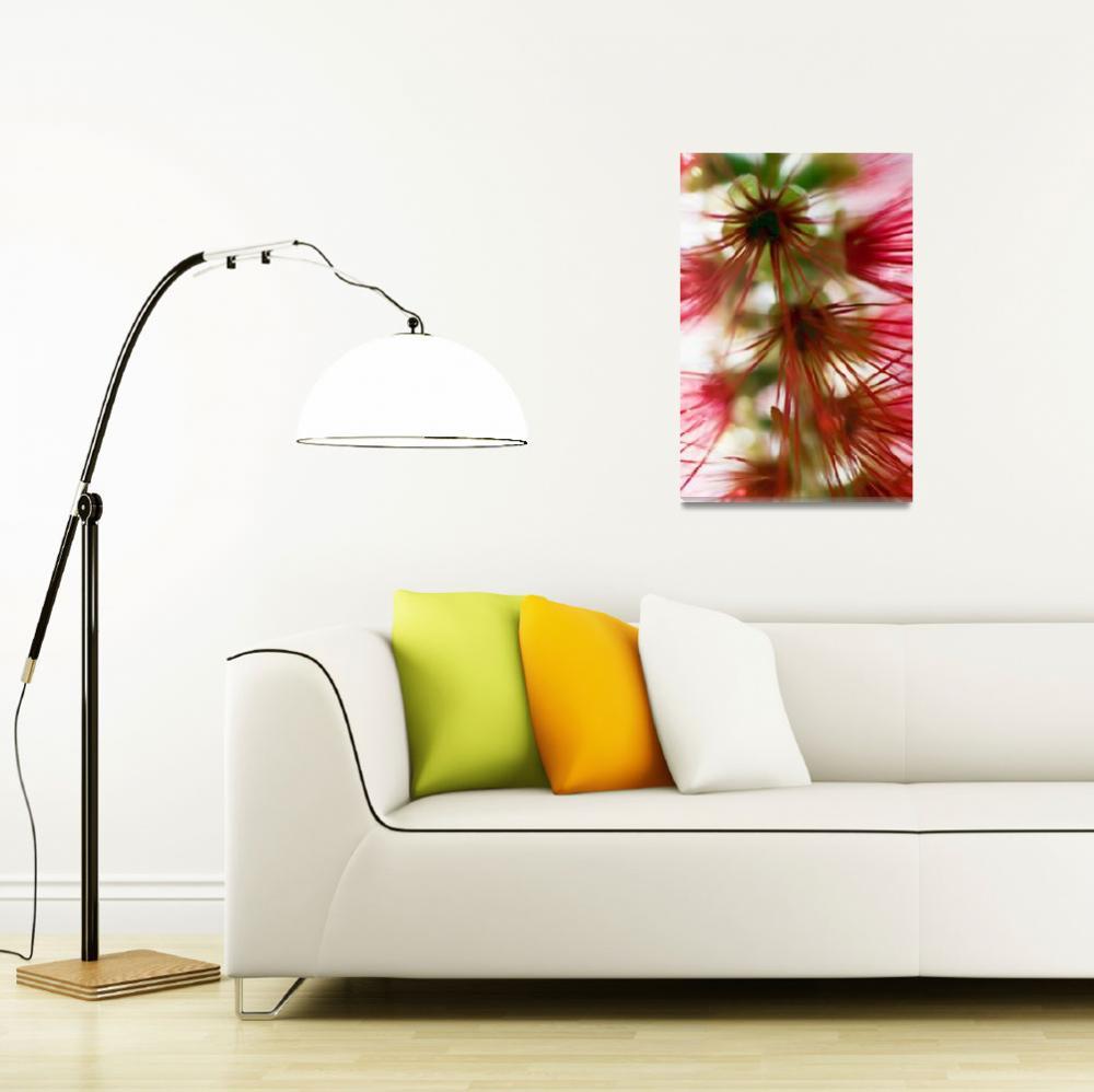 """""""Crimson Bottlebrush""""  by DesignPics"""