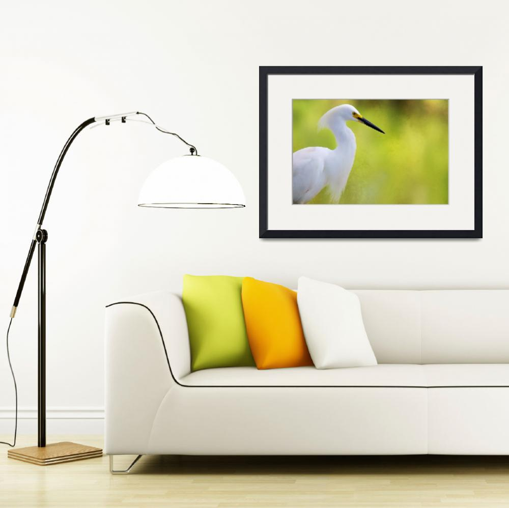 """""""snowy egret.""""  (2012) by evelyng23"""