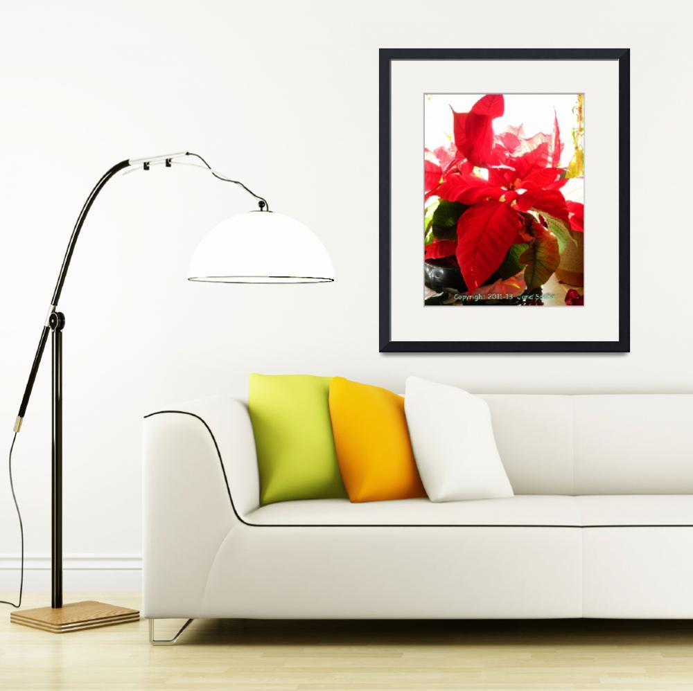 """Poinsettia In Light&quot  by MysticLightPhotography"