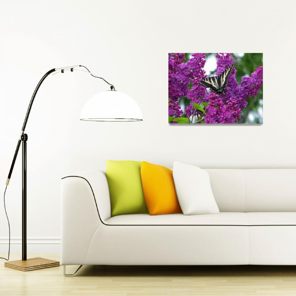 """""""Butterfly on Lilacs""""  (2011) by mulanax"""