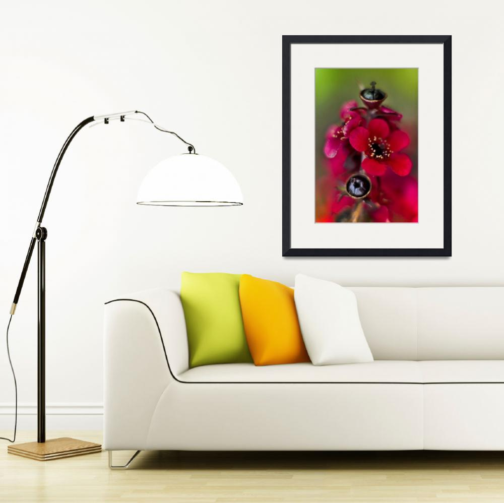 """""""Red flowers&quot  (2008) by e-gallery"""
