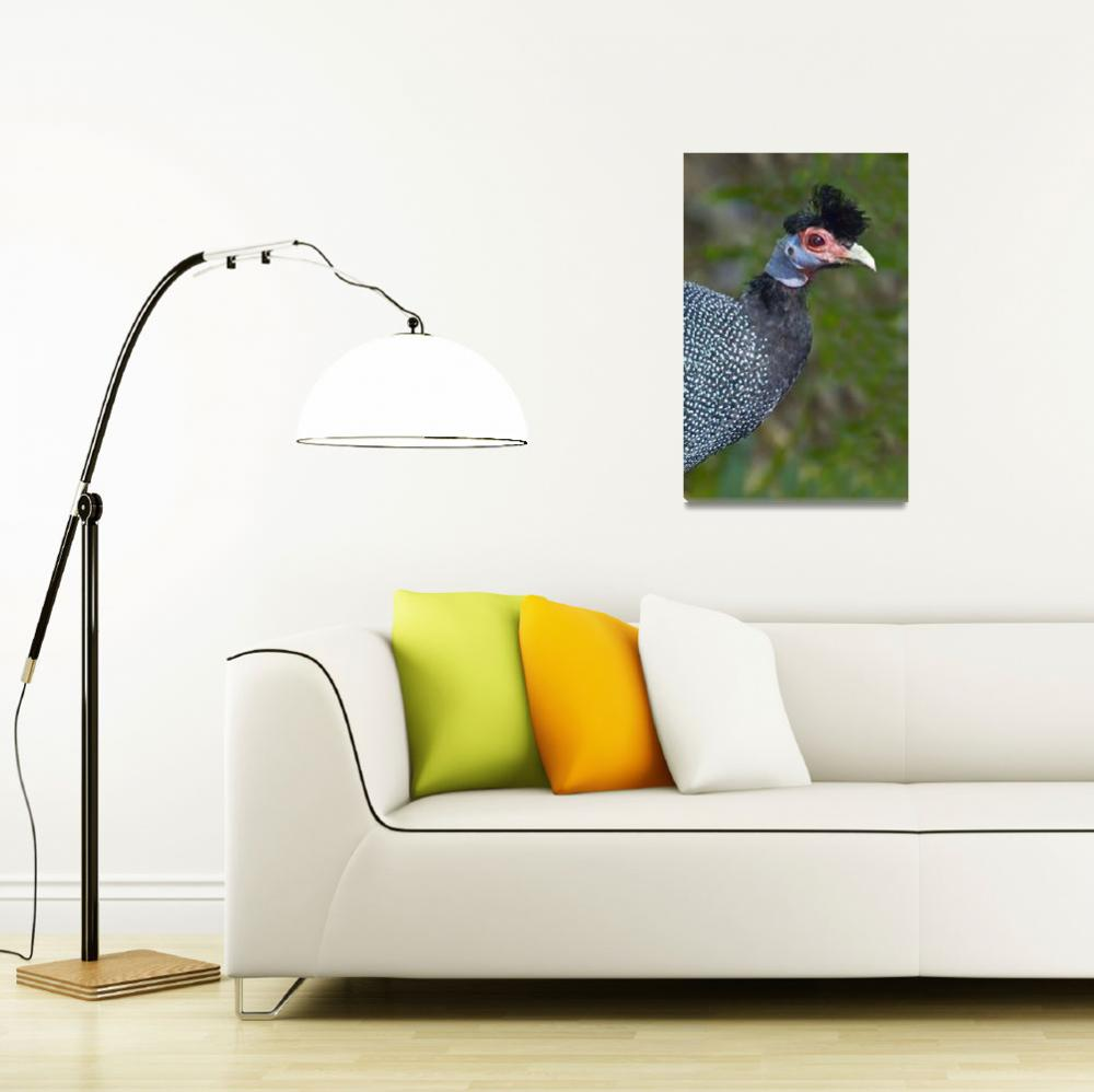 """""""Side profile of a Crested guinea fowl""""  by Panoramic_Images"""