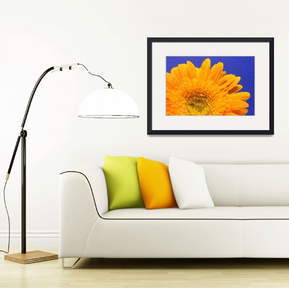 """Gerbera Daisy Against Blue&quot  (2010) by LauraM"