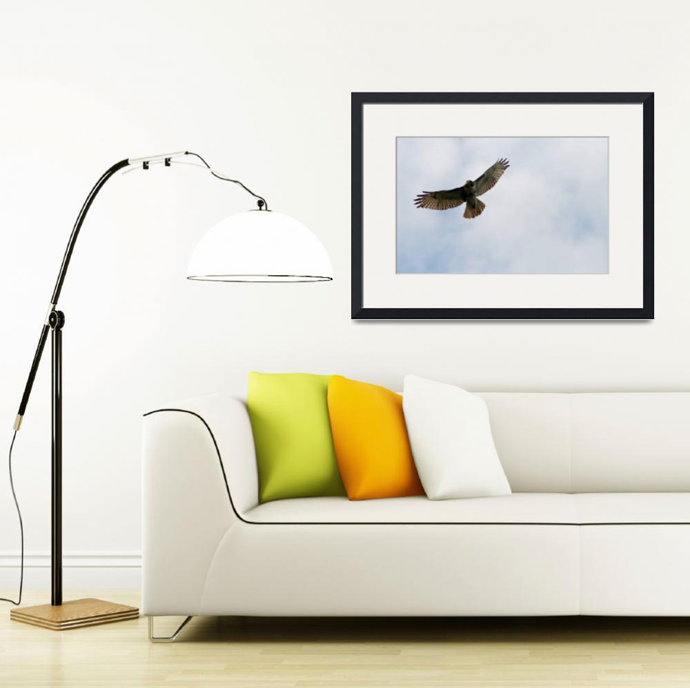 """""""Red-Tailed Hawk in Sky&quot  (2012) by KsWorldArt"""