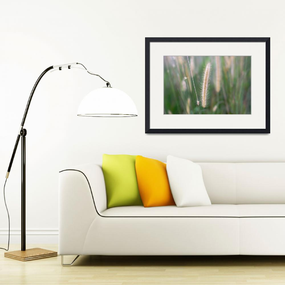 """""""Fountain Grass""""  (2009) by thepathtraveller"""