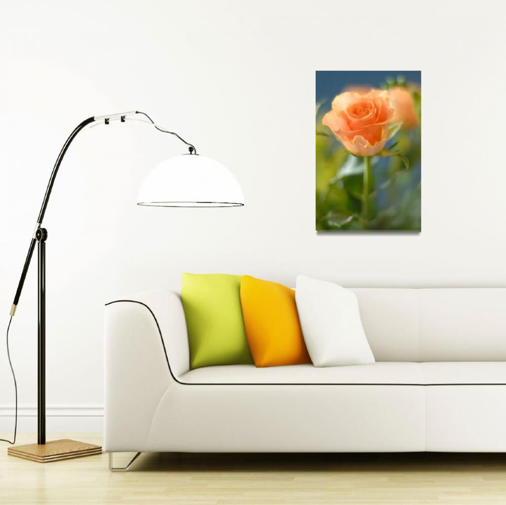 """Orange Rose with Soft Focus""  (2008) by dennissmithphotographic"