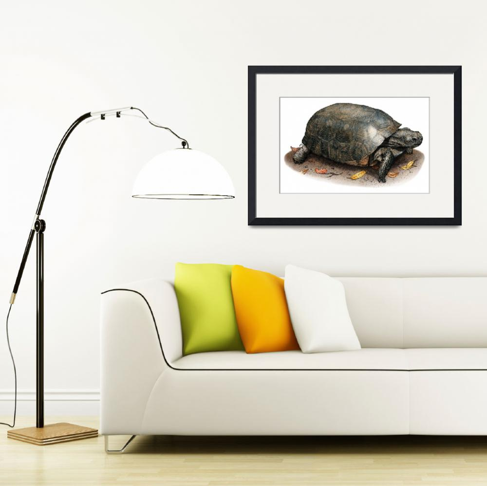 """""""Gopher Tortoise&quot  by inkart"""