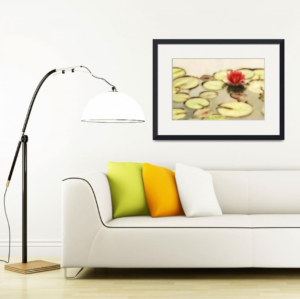 """""""Water Lily Number 2&quot  (2010) by vincent-field_photography"""