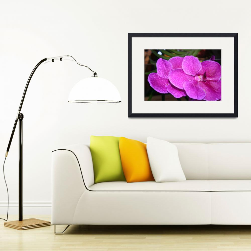 """""""Violet Orchid""""  (2010) by NatureScenes"""
