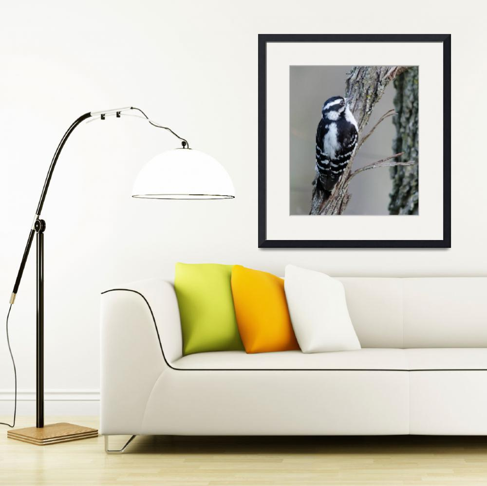 """""""Downy Woodpecker&quot  (2012) by WildAboutNaturePhotography"""