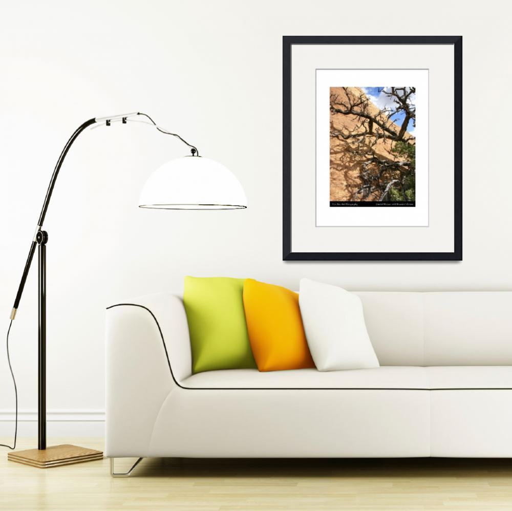 """""""Tree and Sandstone""""  (2005) by MikeFoxPhotojournalist"""