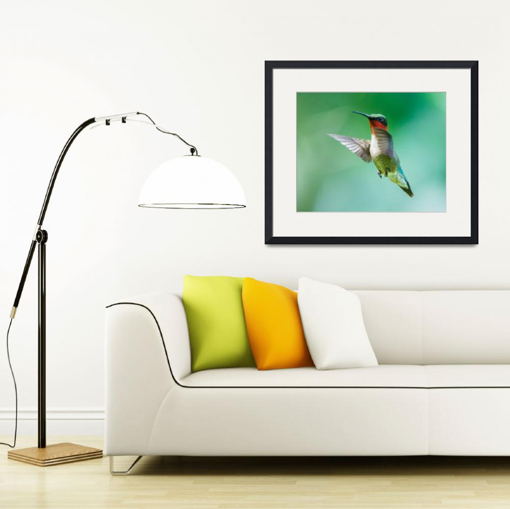 """""""Male Ruby-throated Hummingbird""""  (2014) by NatureAsArt"""