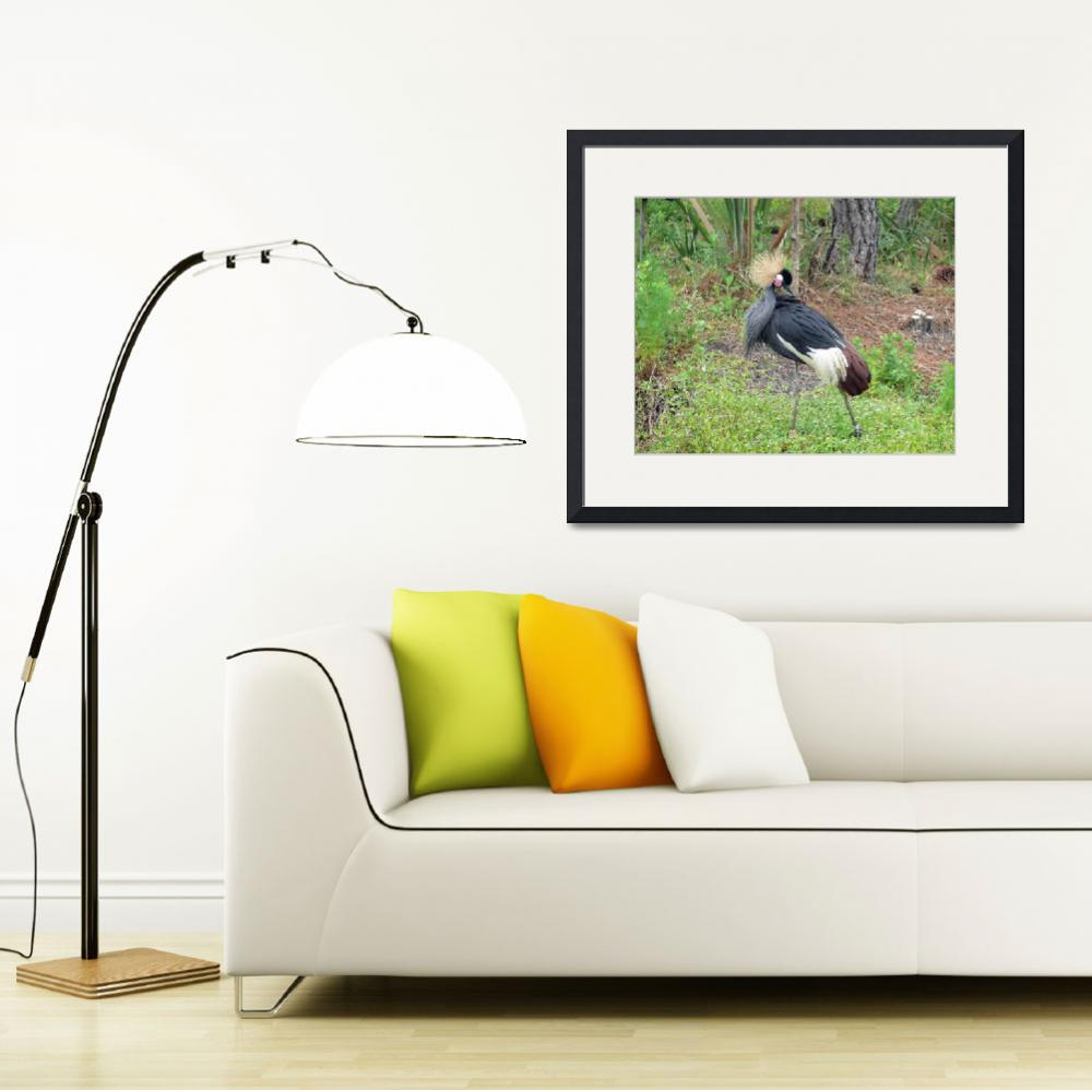 """Black Crowned Crane&quot  (2008) by stockphotos"