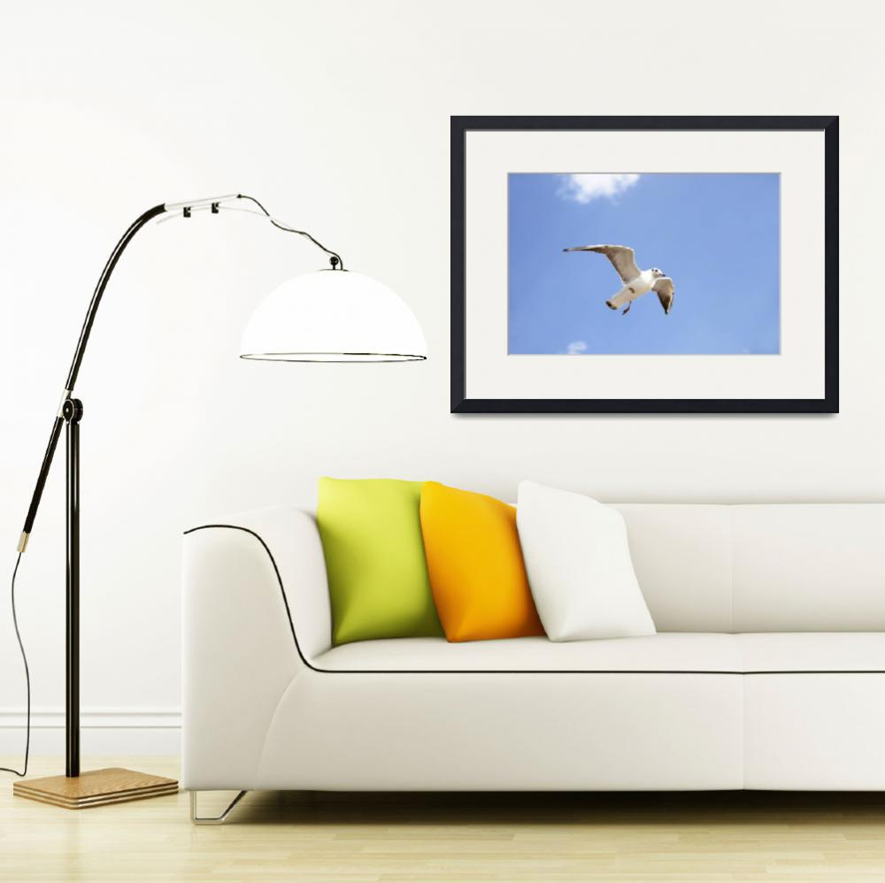 """""""White seabird flying and soaring in the blue air.&quot  by Todikromo"""