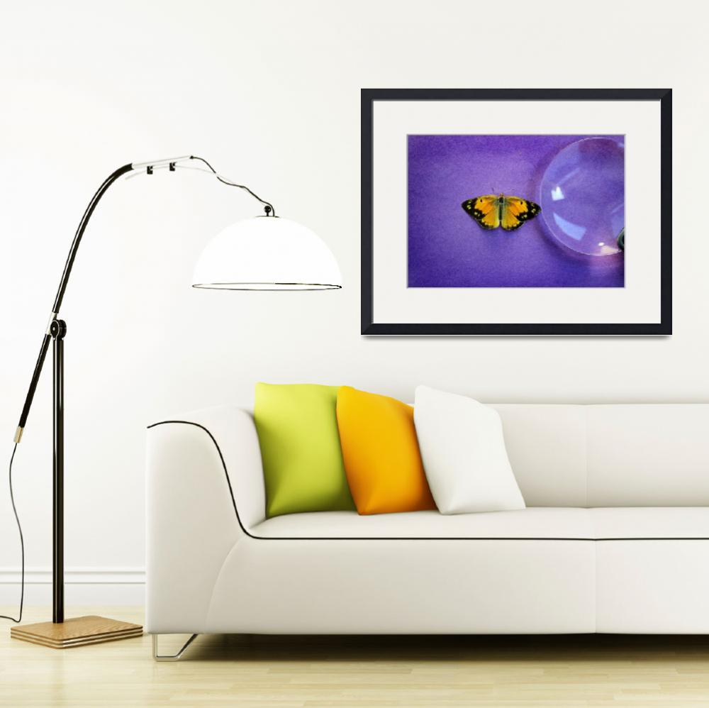 """""""Butterfly Discovery&quot  (2016) by KsWorldArt"""