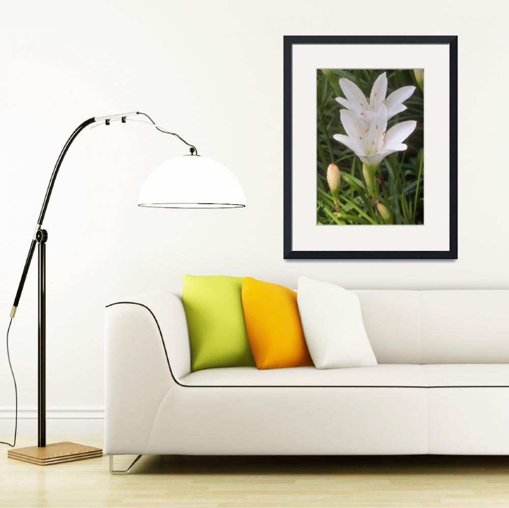 """""""Easter Lily&quot  by TerryCrain"""