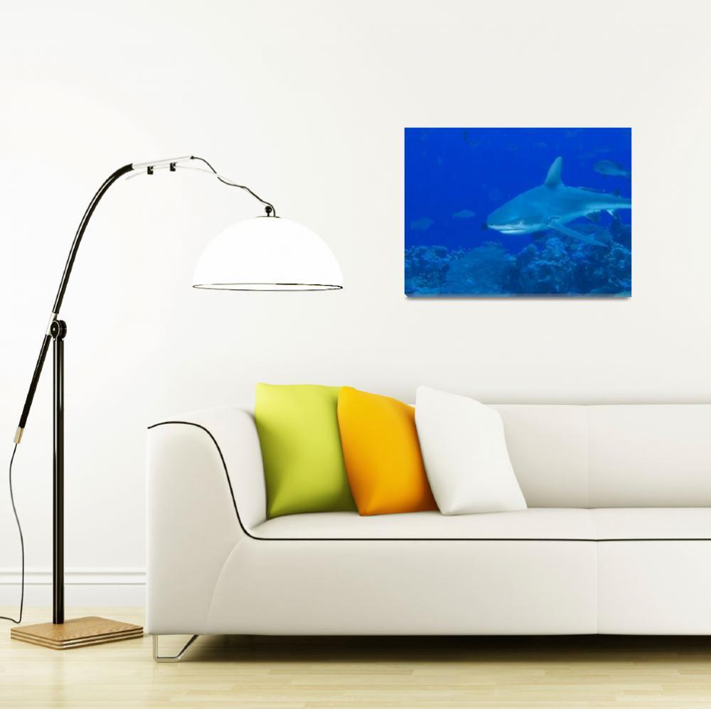 """Gray Reef Shark&quot  (2009) by Mac"