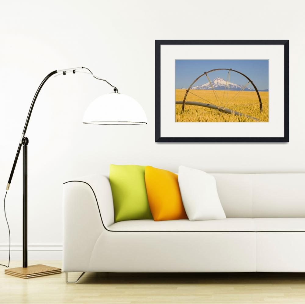 """""""Irrigation Pipe In Wheat Field With Mount Hood In&quot  by DesignPics"""