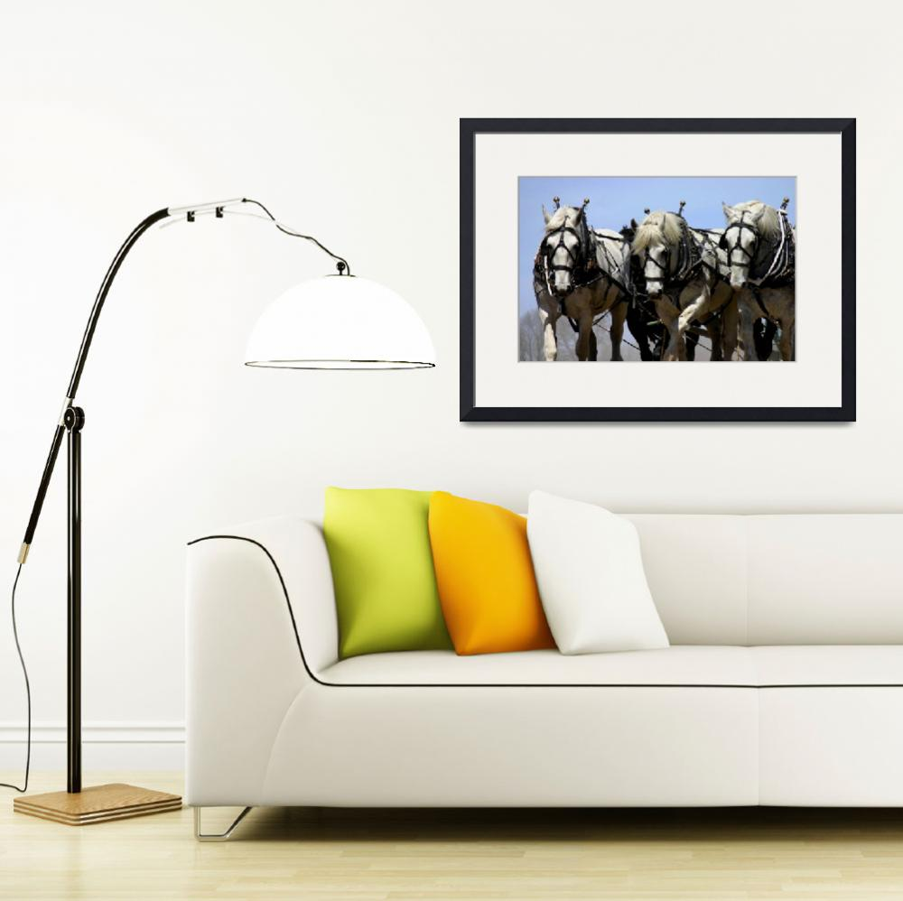 """""""Percherons""""  by SolacePointe"""