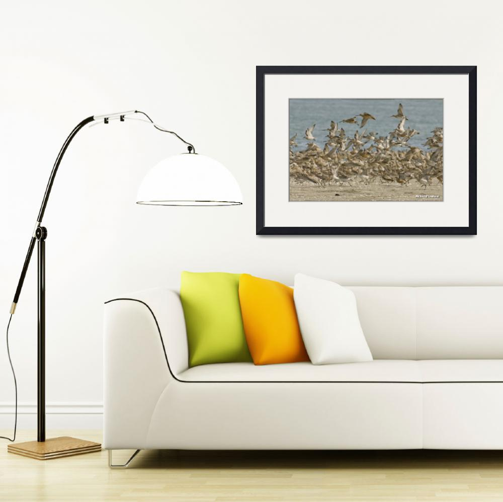 """""""Godwit Flock On Beech Taking Off&quot  (2010) by northandsouthphotography"""