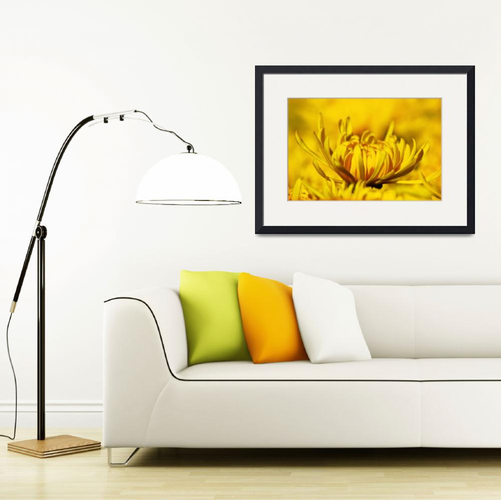 """""""Yellow Flower in closeup&quot  (2012) by charker"""