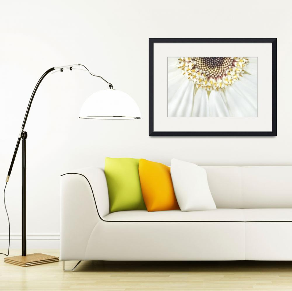"""""""Gerbera_&quot  (2014) by OneliaPGPhotography"""