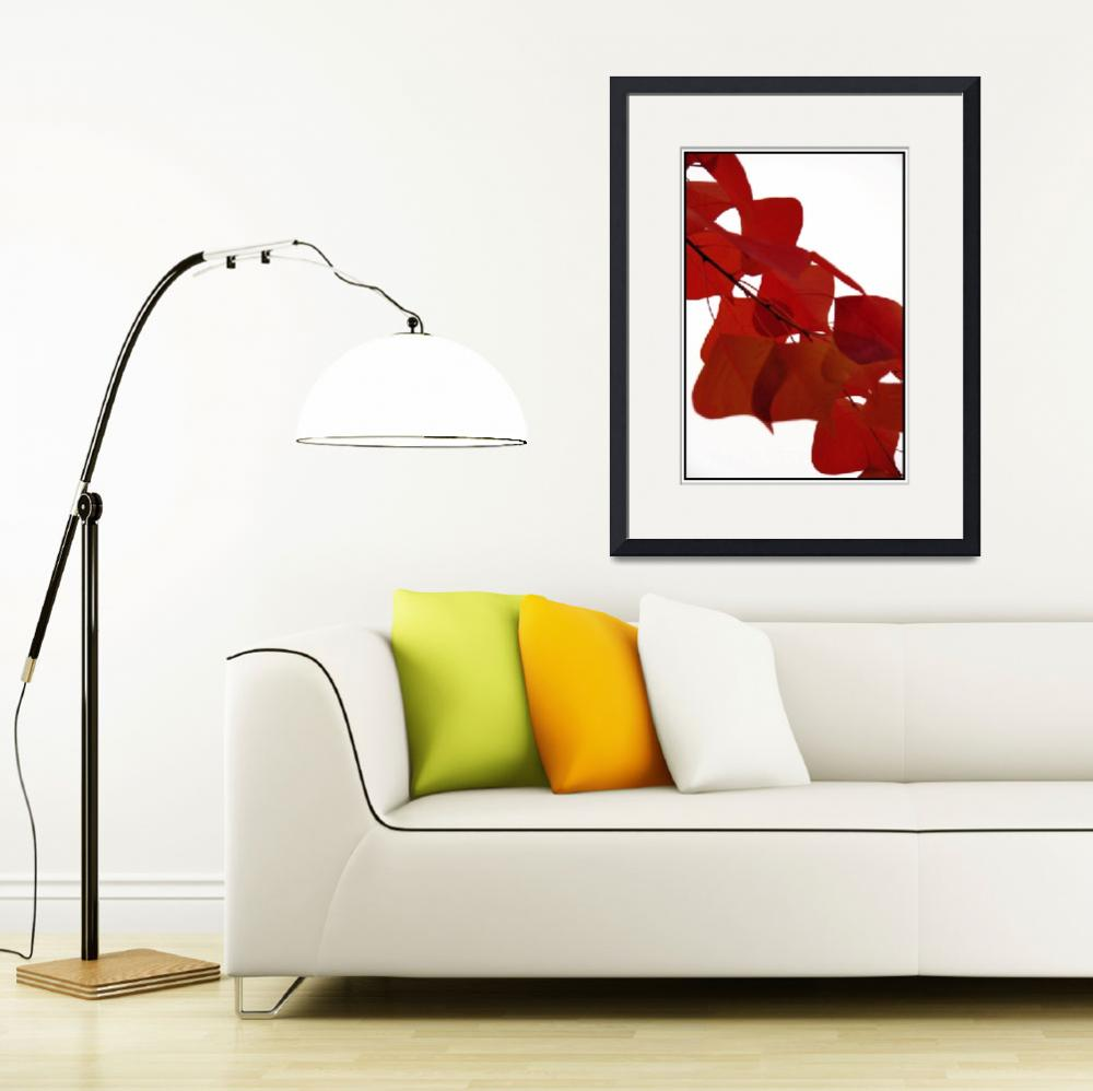 """""""Red Leaves""""  by usama"""
