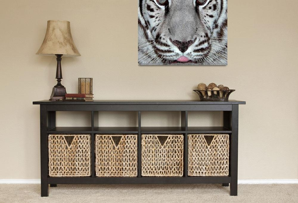"""""""White Tiger&quot  by toots"""