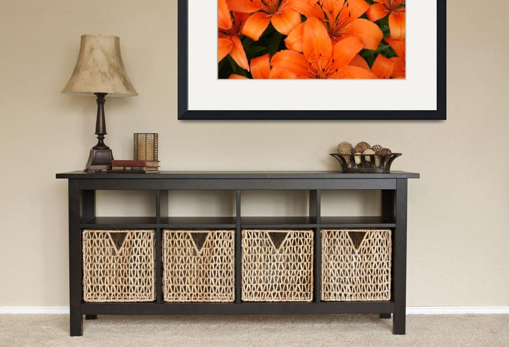 """Orange Lilies (Wide)&quot  (2010) by CreativeImage"