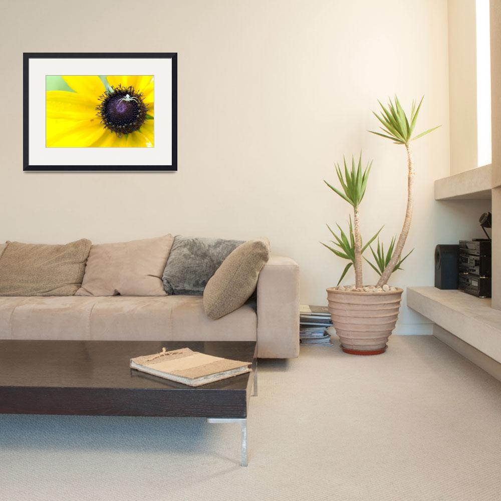 """""""Spider On Black Eyed Susan&quot  (2008) by liquidtree"""