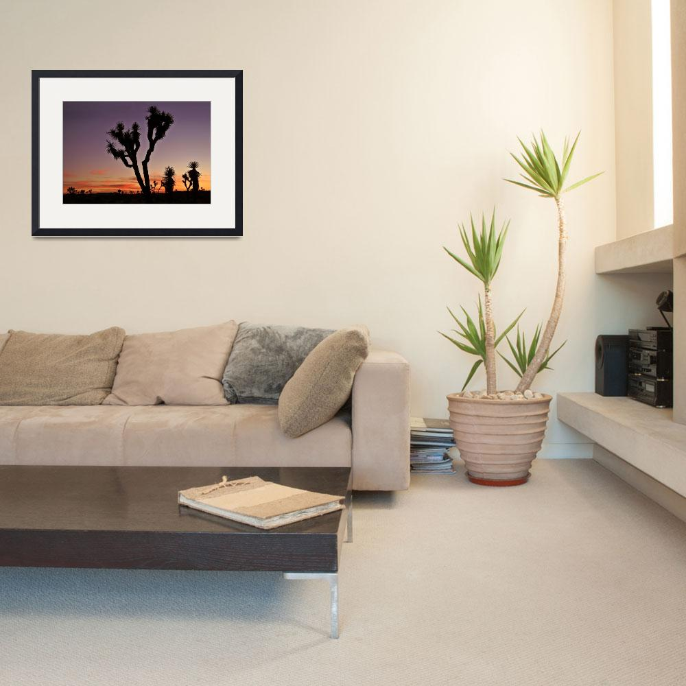 """""""Joshua Tree National Park&quot  by pbk"""
