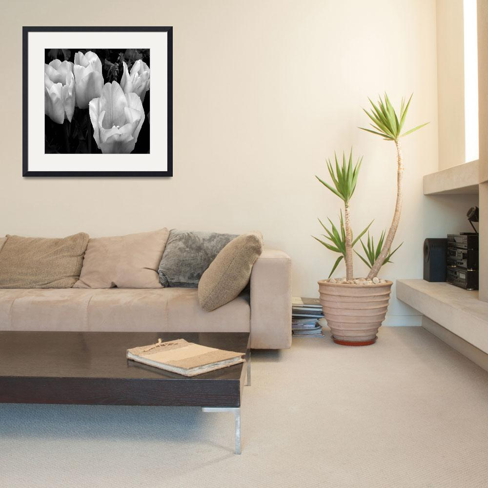 """""""Tulips in Black and White""""  (2009) by patriciaschnepf"""