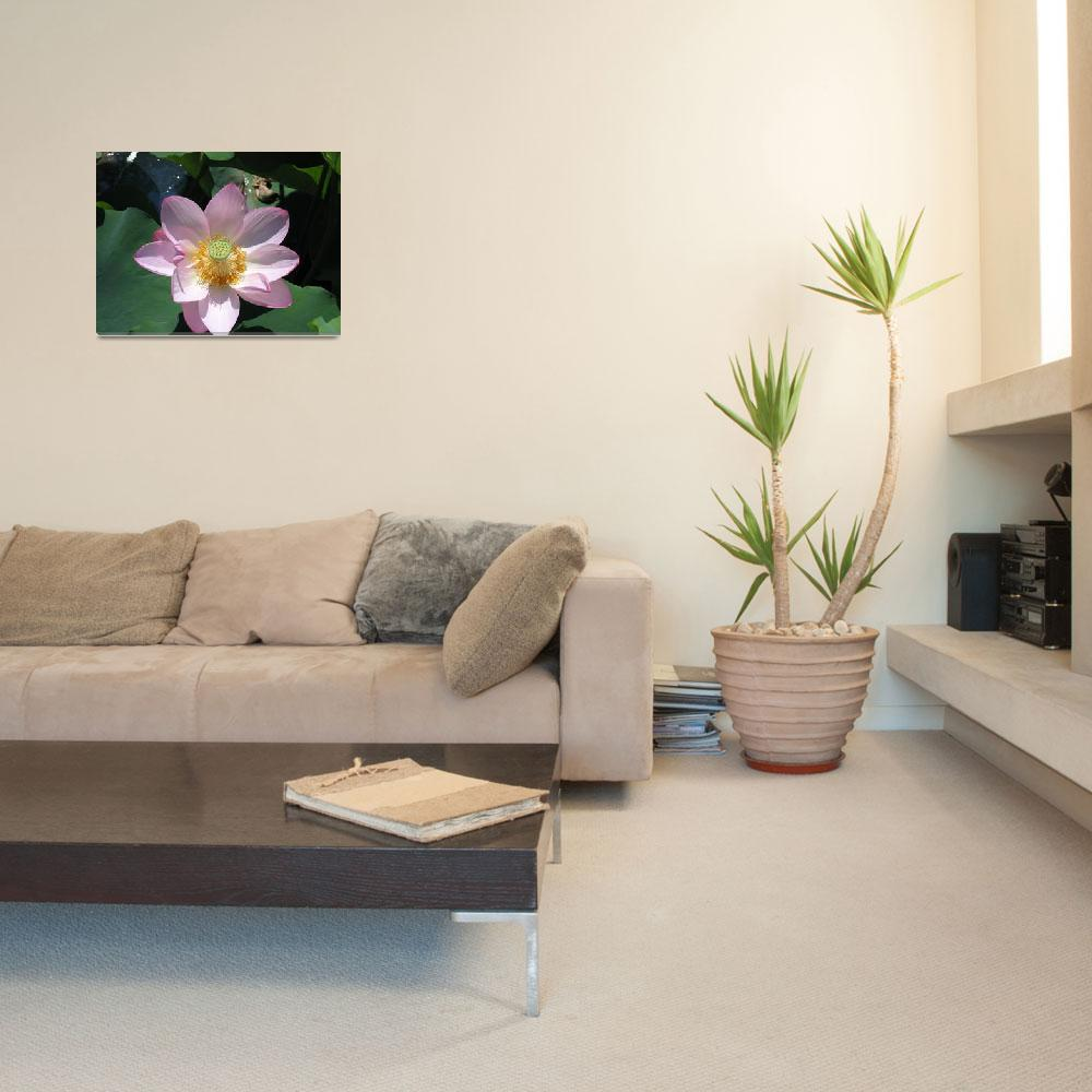 """""""Lotus Lilly&quot  (2009) by PoPophotos"""