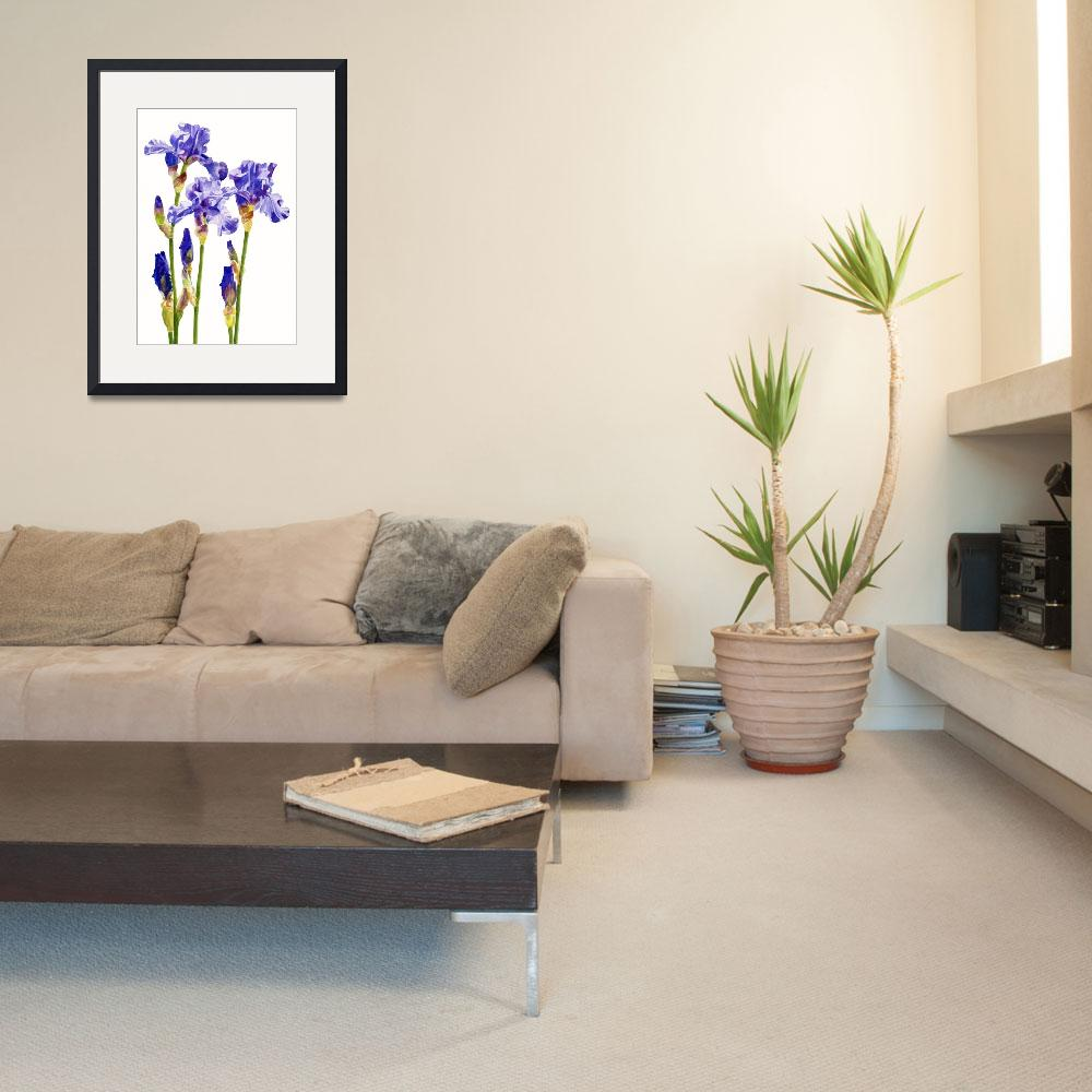 """""""Three Purple Irises (white background)""""  (2013) by Pacific-NW-Watercolors"""