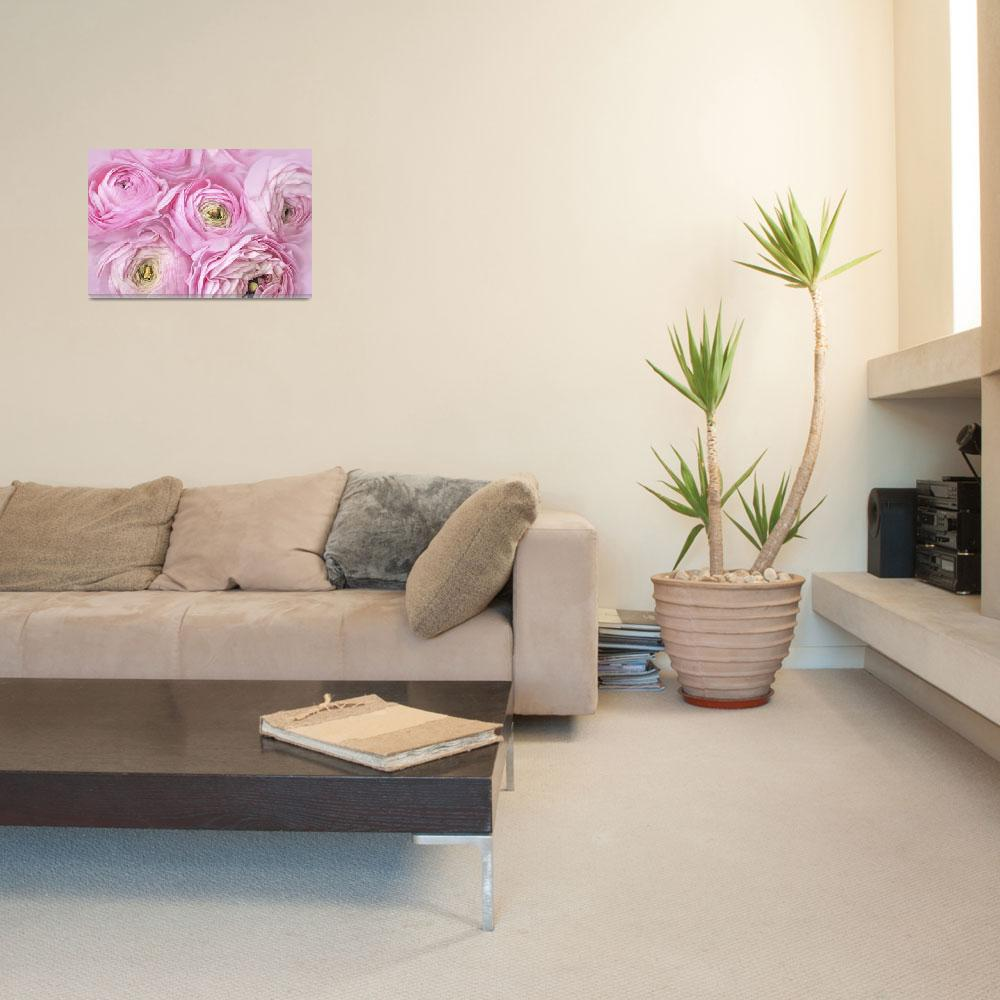 """Pink Ranunculus flower arrangement&quot  (2014) by OneliaPGPhotography"