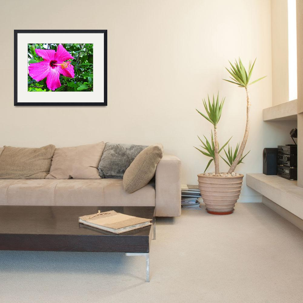 """""""Hot Pink Hibiscus""""  (2011) by MaryDolan"""