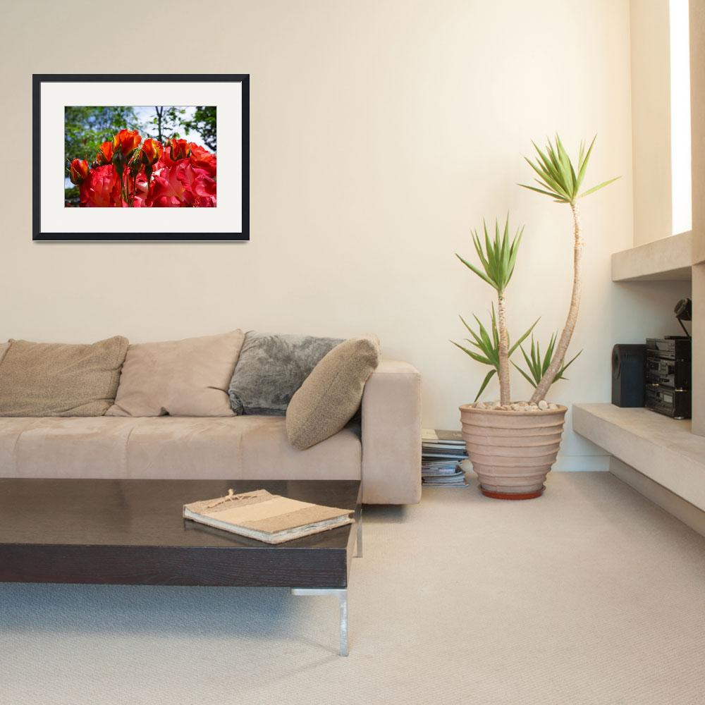 """Red Orange Roses Art Prints Rose Flowers Floral""  (2014) by BasleeTroutman"