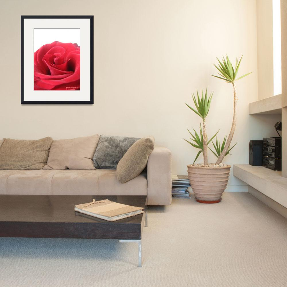 """""""Beauty of a rose&quot  (2008) by seema"""