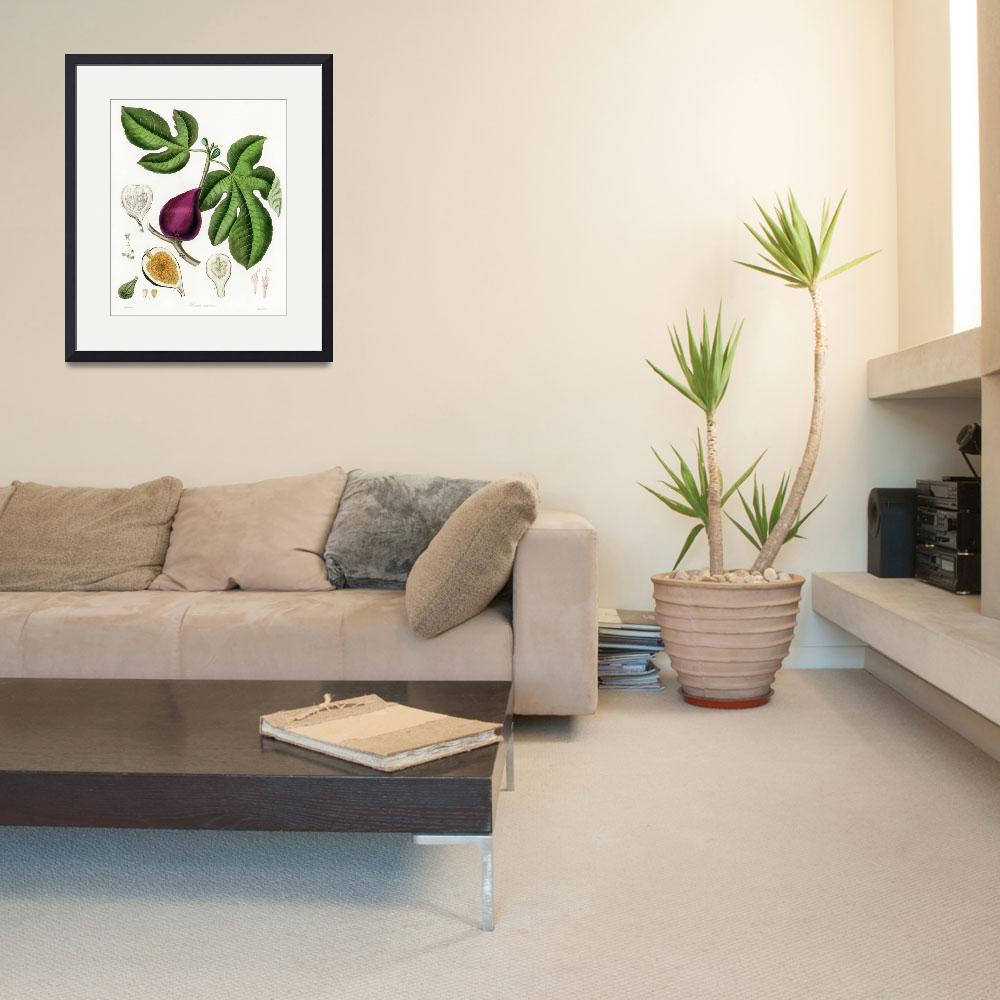 """""""Vintage Botanical Fig""""  by FineArtClassics"""