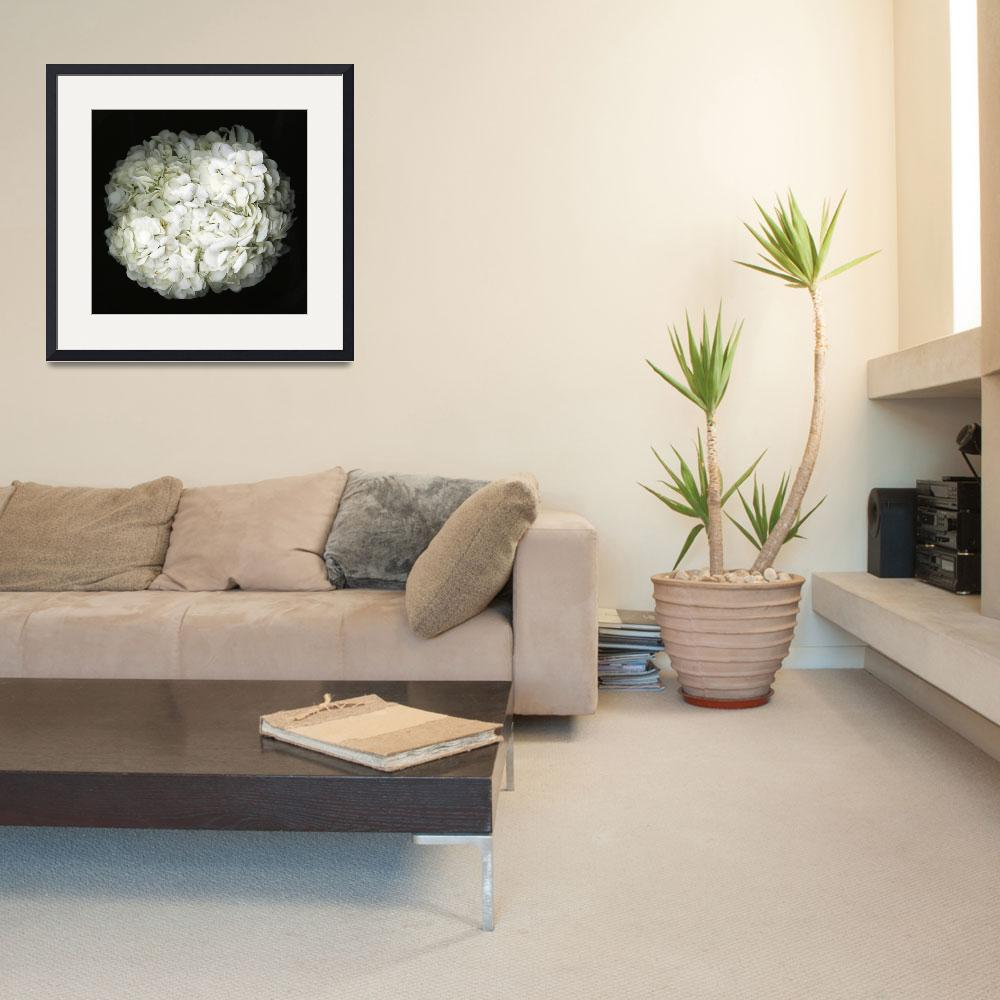 """""""Hydrangea- Black and white photography&quot  (2017) by modernhouseart"""