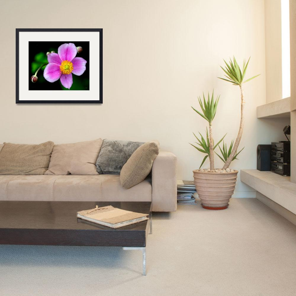 """""""Japanese Anenome&quot  by StudioT"""