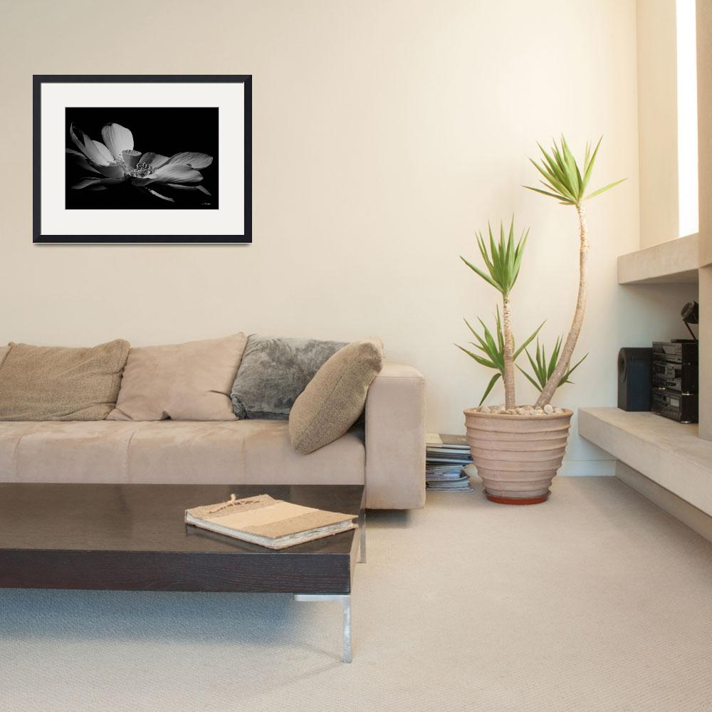 """""""Lotus In Monochrome&quot  by TBurgess"""