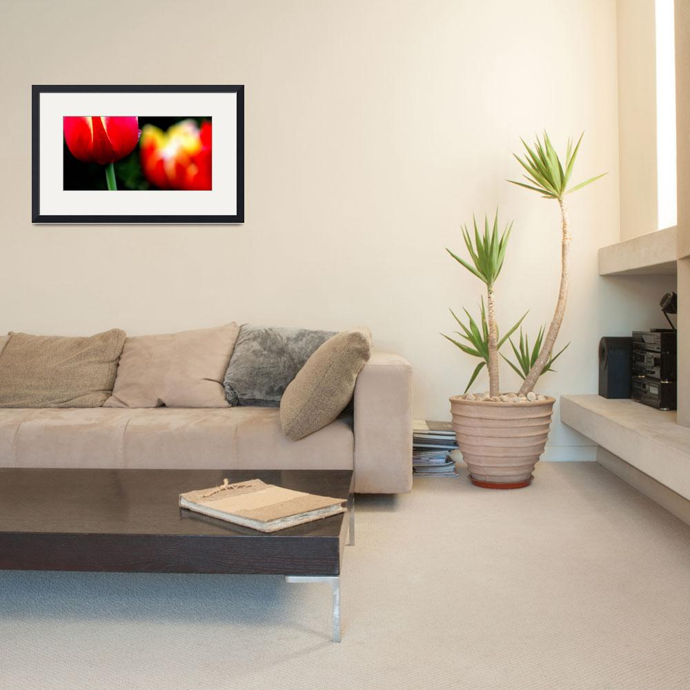 """""""Red Yellow Tulips""""  (2014) by joanhan"""