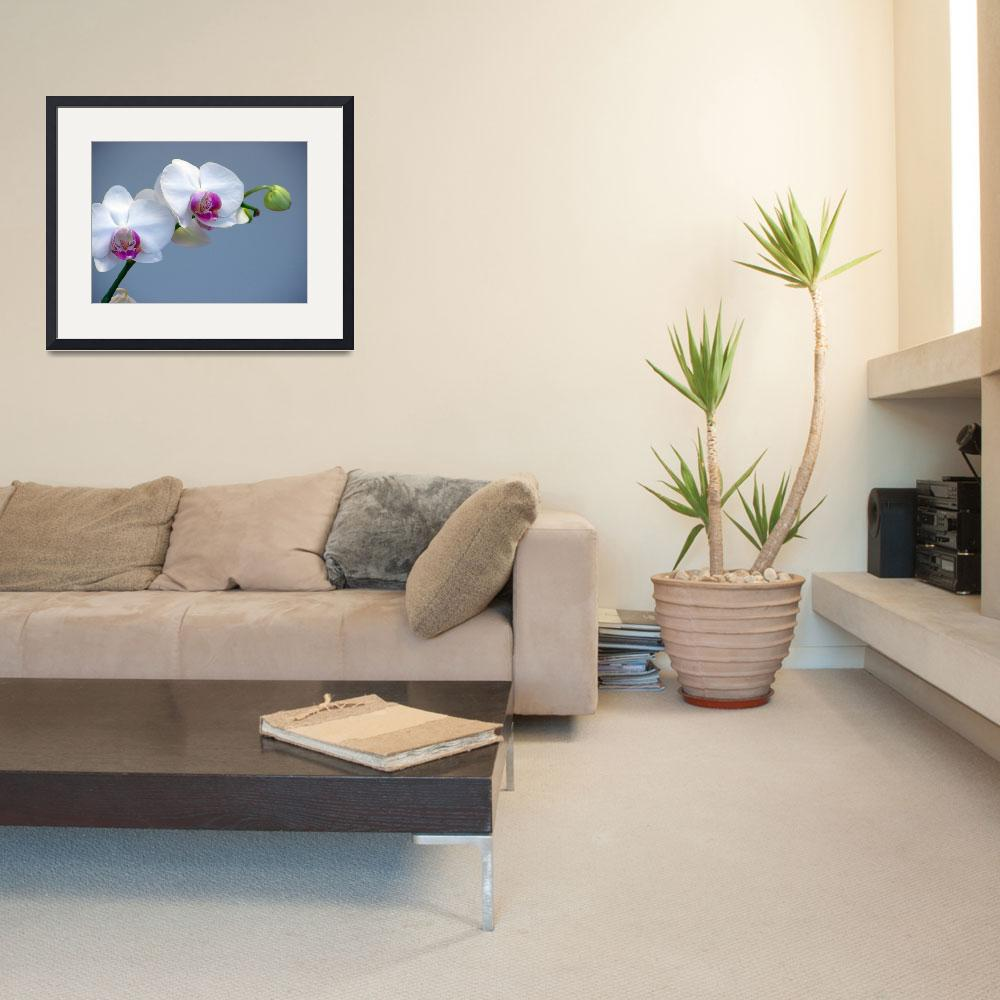 """White Orchid Loveliness""  (2006) by Infomages"